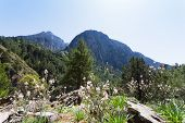 foto of samaria  - Starting your trip through the giant gorge of Samaria - JPG