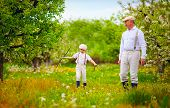 stock photo of grandpa  - grandpa with grandson walking through the spring garden - JPG