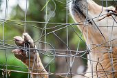 stock photo of stray dog  - Close up view of the paw of a stray dog behind the corral of a dog refuge - JPG