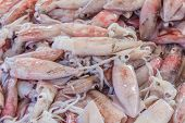 stock photo of squid  - Fresh squid Produce at the Market in Krabi Town Thailand - JPG