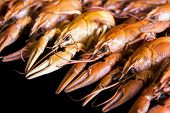 picture of crawfish  - Photo of background with red boiled crawfishes - JPG