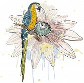 stock photo of parrots  - Vector sketch of a parrot with flower - JPG