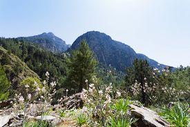 pic of samaria  - Starting your trip through the giant gorge of Samaria - JPG