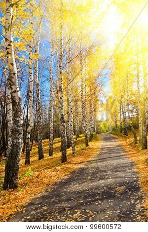 Pathway in sunny autumn forest