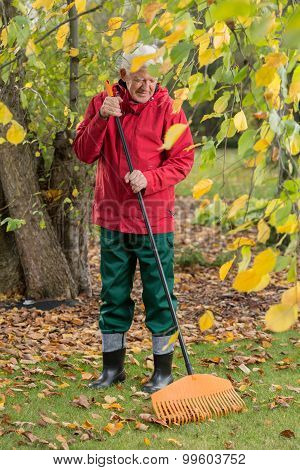 The Older Man Cleans Leaves