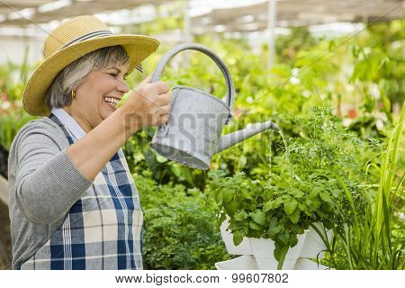 Beautiful mature woman in a greenhouse watering flowers