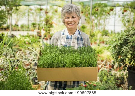Beautiful mature woman holding fresh herbs
