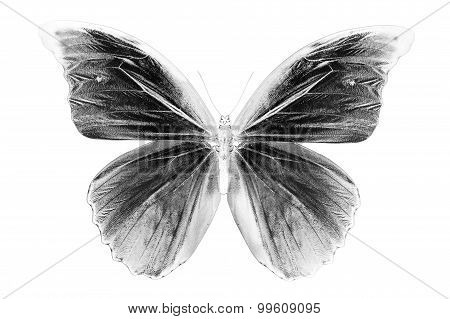 Black and white image of beautiful butterfly background