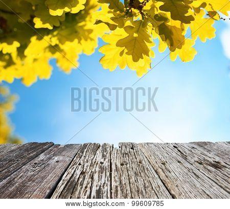 Autumn oak leaves in sunlight
