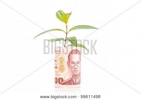 Concept Of Green Plant Grow On Thailand Baht Currency Note