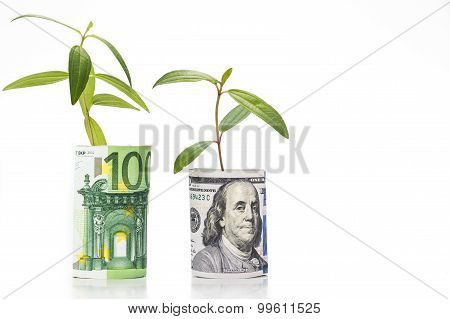 Concept Of Green Plant Grow On Usd Against Euro Currency