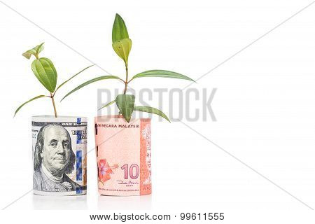 Concept Of Green Plant Grow On Usd Against Malaysia Ringgit Currency