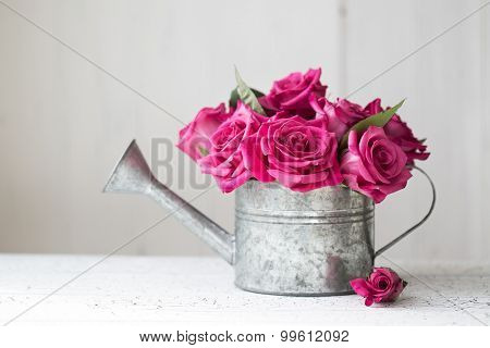 Pink roses in a vintage watering can