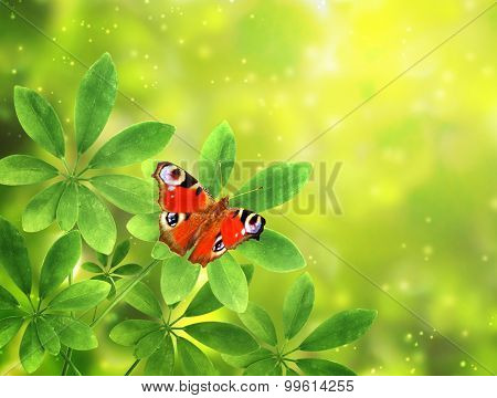 Green leaves and butterfly peacock on sunny background
