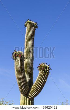 Beautiful Cacti In Landscape