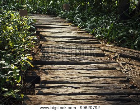 Trail Track Wooden Path Way Trail Running Outdoor