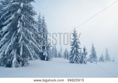 Winter landscape with a mountain forest. Cloudy day . Carpathians, Ukraine, Europe