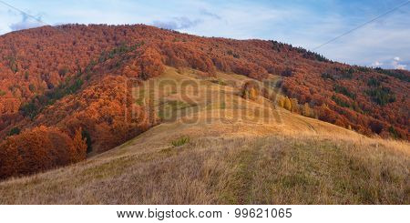 Path in the mountains. Autumn Landscape with beech forest
