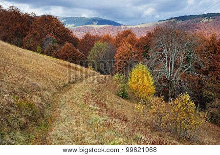 Road in the mountain forest. Autumn Landscape