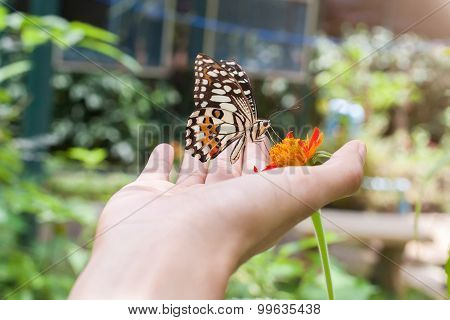 The Butterfly On Hand At Chiang Mai National Park Thailand