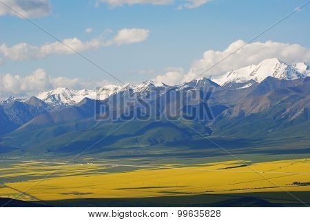 The snow capped mountains