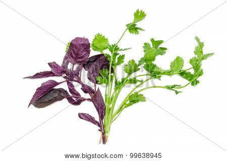 Branches Of Basil And Coriander On A Light Background