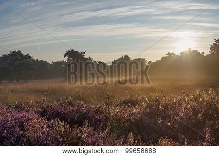 Peaceful Sunrise Over Dutch Heathland
