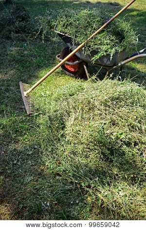 Mowing The Meadow