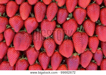 Red Strawberries Fruit