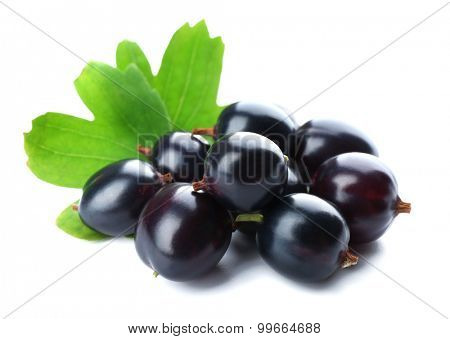 Wild black currant with green leaves isolated on white