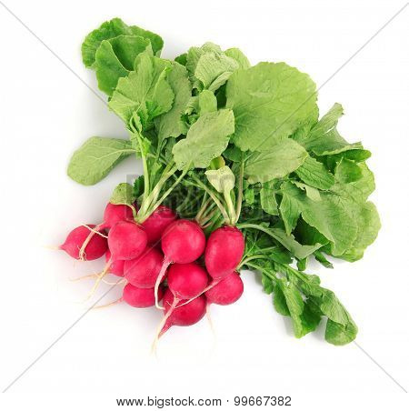 Fresh red radish isolated on white