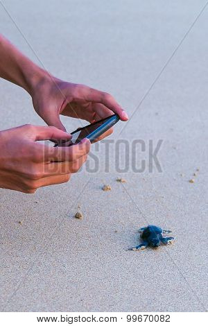 Photographing Sea Turtle