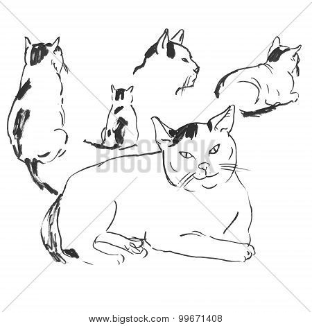 sketches of cats in different poses.doodles