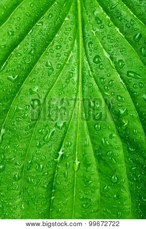 Fresh green leaf with drops, close up