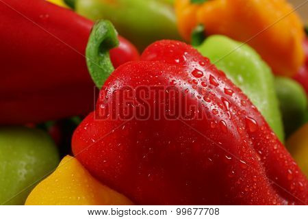 Wet colorful peppers background