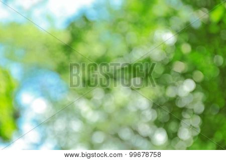 Abstract nature blurred background