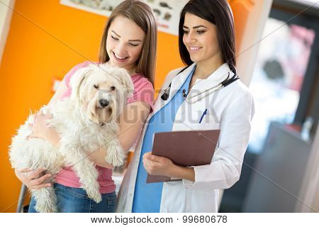 Female owner with her beautiful Maltese dog and veterinarian at vet ambulant