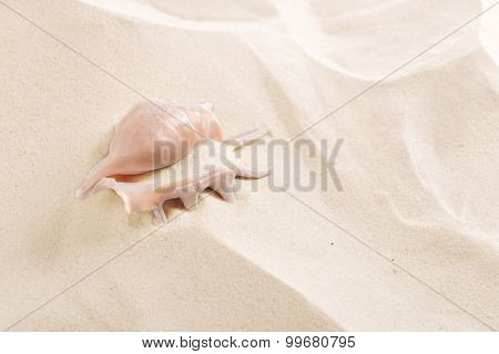 Seashell on sea sand background
