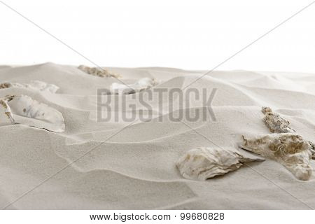 Seashells on sea sand isolated on white
