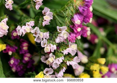 Beautiful wild flowers close up
