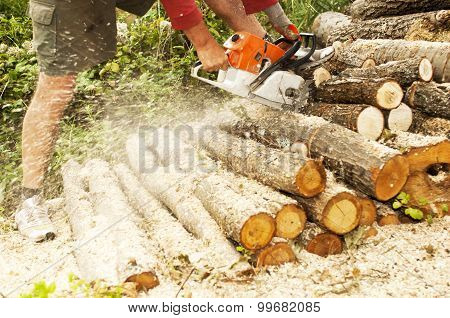 Lumberjack Cuts The Trunk