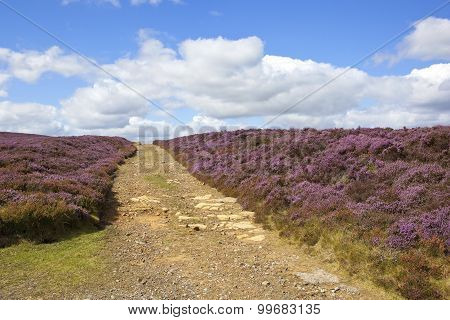 Stony Moorland Bridleway