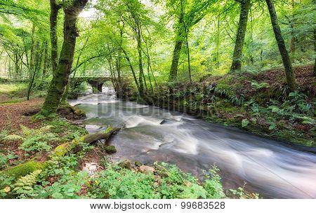 Woodland On Bodmin Moor