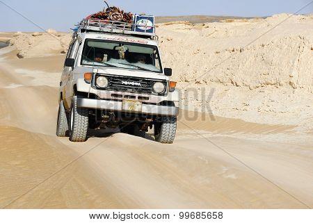 Sahara Safari