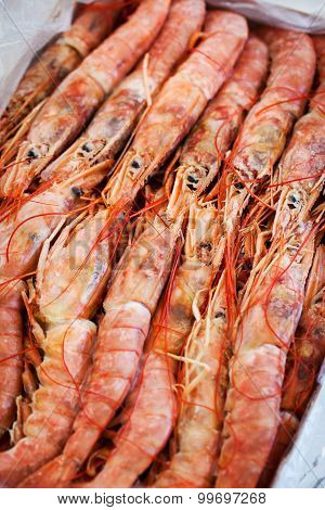 Fresh Raw  Langoustines