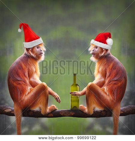 Two drunken monkeys with bottle have a fun on christmas party in rainforest.