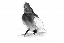 stock photo of inverted  - Black and white portrait of bird - JPG