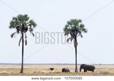 Elephants And Ostrich At Two Palms.