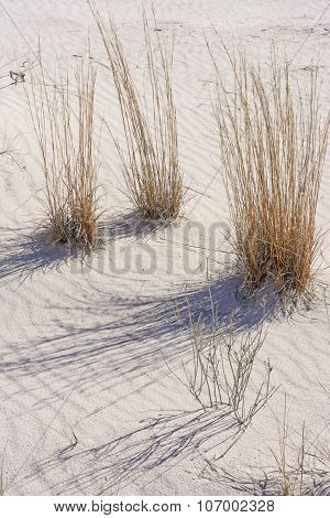 Desert Grasses And Shadows In The White Sands