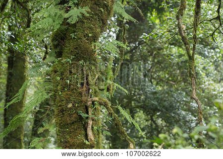 Green Tree With Moss And Fern In Rain Forest